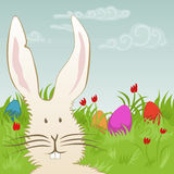 Cute easter bunny on a meadow Stock Images