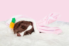 Cute Easter Bunny Puppy Royalty Free Stock Photo