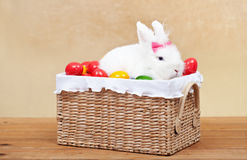 Cute easter bunny sitting in basket Stock Image