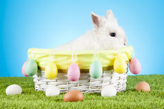 Cute Easter Bunny sitting in a wicker basket decorated with Easter eggs with  green twigs in the background Stock Photos