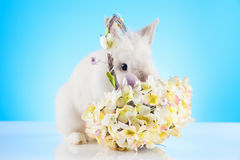 Cute Easter Bunny sitting in a wicker basket decorated with Easter eggs Royalty Free Stock Photography