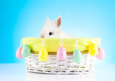 Cute Easter Bunny sitting in a wicker basket decorated with Easter eggs Stock Photos