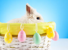 Cute Easter Bunny sitting in a wicker basket decorated with Easter eggs Royalty Free Stock Photo