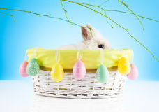 Cute Easter Bunny sitting in a wicker basket decorated with Easter eggs Royalty Free Stock Images