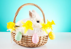 Cute Easter Bunny sitting in a wicker basket decorated with Easter eggs Royalty Free Stock Photos