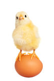 Cute easter chick with egg Stock Images