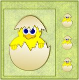 Cute easter chick in eggshell Royalty Free Stock Photography