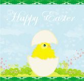 Cute Easter chicken in egg shell Royalty Free Stock Image