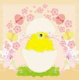 Cute Easter chicken in egg shell Royalty Free Stock Photography