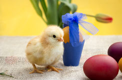 Cute Easter chicken with eggs Stock Images