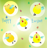 Cute Easter Chickens Stock Photos