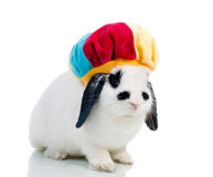 Cute easter rabbit close-up isolated o Royalty Free Stock Image