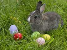 Cute easter rabbit Stock Images