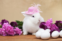 Cute easter rabbit with spring flowers and white eggs Stock Photos