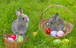Cute easter rabbits Royalty Free Stock Photos