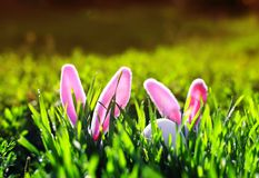 Cute Easter scene with a pair of toy rabbits with ears sticking out of the green juicy grass in the spring meadow stock image