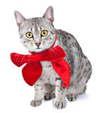 Cute Egyptian Mau Cat with Red Bow Stock Images