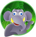 Cute elephant Stock Photography