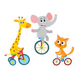 Cute elephant, giraffe, cat animal characters riding unicycle, bicycle, tricycle Royalty Free Stock Photos