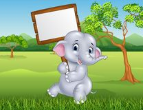 Cute elephant holding blank sign in the jungle Stock Photos