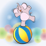 Cute elephant play on Ball Stock Images