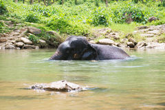 Cute elephant is playing water in canal Stock Photo