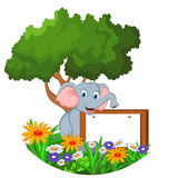 Cute elephant sitting with blank sign Stock Photo