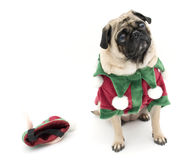 Cute Elf Pug. Isolated Against White Background Stock Images