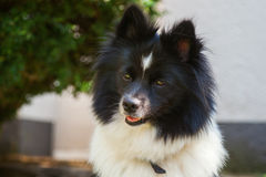 Cute Elo dog Stock Images