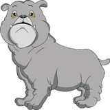 Cute english bulldog cartoon Stock Image