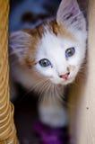 Cute eyes! Stock Image