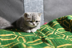 Cute face, newly born kitten Stock Images