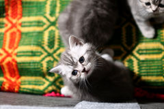 Cute face, newly born kitten Stock Photography