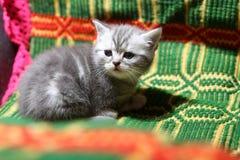 Cute face, newly born kitten Royalty Free Stock Photos