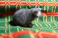 Cute face, newly born kitten Stock Photo