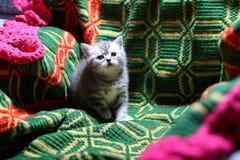 Cute face, newly born kitten Royalty Free Stock Photo