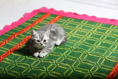Cute face, newly born kitten. On a green traditional handmade carpet royalty free stock photography
