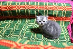 Cute face, newly born kitten Royalty Free Stock Photography