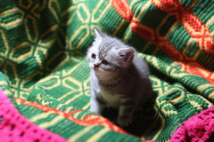 Cute face, newly born kitten. On a green traditional handmade carpet stock photos