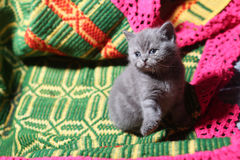 Cute face, newly born kitten. On a green traditional handmade carpet stock photography