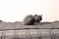Cute face, newly born kitten Royalty Free Stock Image