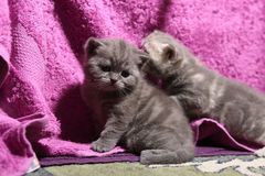 Cute face, newly born kitten Stock Image