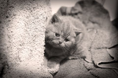 Cute face, newly born kitten. Towels as background stock photos