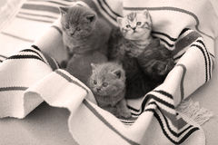 Cute face, newly born kittens looking up Stock Image