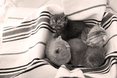 Cute face, newly born kittens looking up. Cute faces, newly born kittens looking up sitting on a traditional handmade carpet royalty free stock images