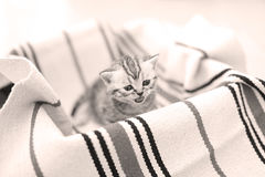 Cute face, newly born kittens looking up Royalty Free Stock Image