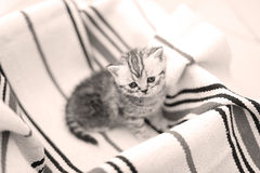 Cute face, newly born kittens looking up Royalty Free Stock Photos