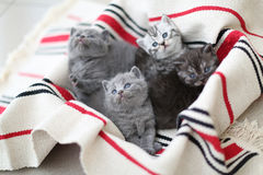 Cute face, newly born kittens looking up. Cute face, newly born kittens on a traditional handmade carpet, red striped rug stock photography