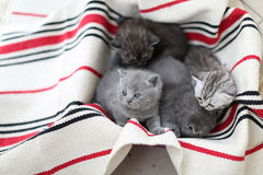 Cute face, newly born kittens looking up. Cute face, newly born kittens on a traditional handmade carpet, red striped rug royalty free stock photography