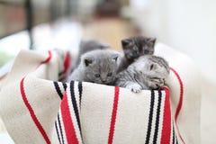 Cute face, newly born kittens stock photos